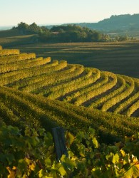 Autumn vineyard landscape in Italy